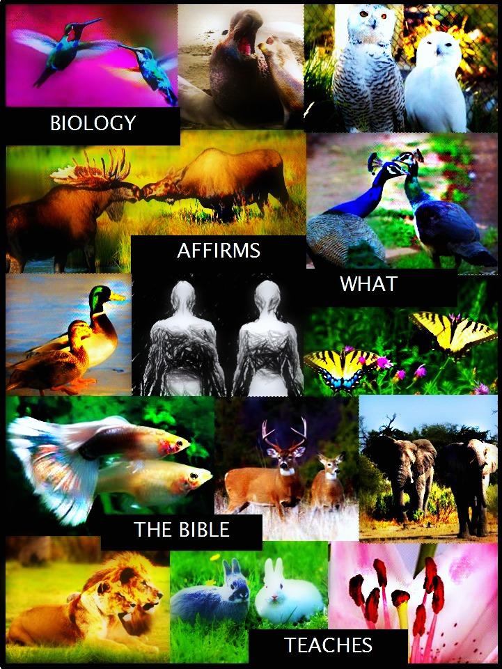 BIOLOGYrt