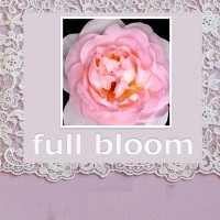 full bloom no details