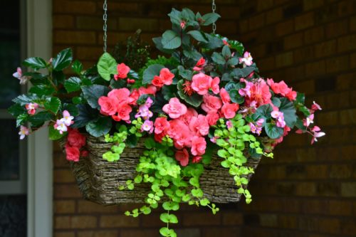 beautiful hanging baskets June 2016