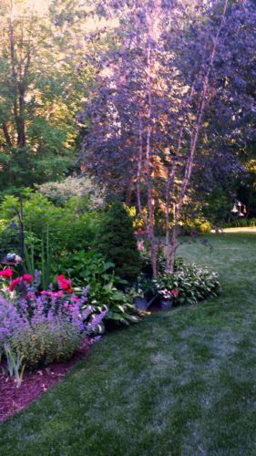 gardenbirch.jpg